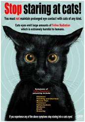 Stop Staring at Cats poster