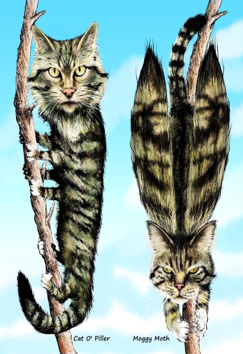 Cat O Piller Moggy Moth bookmark